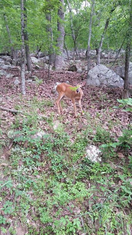 Hiking with BGR Deer